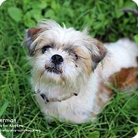 Adopt A Pet :: Sherman - San Antonio, TX