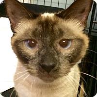 Adopt A Pet :: Thea - Chattanooga, TN