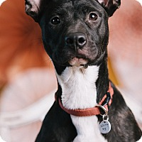 Adopt A Pet :: Tammy - Portland, OR