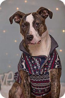 Terrier (Unknown Type, Medium) Mix Dog for adoption in Flint, Michigan - Liam - Rescued