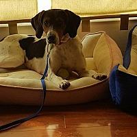 Adopt A Pet :: Heidi - Kingsport, TN