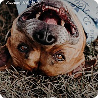 Adopt A Pet :: Mugsy - Overland Park, KS
