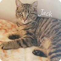 Adopt A Pet :: Jack (Brothers) - York, PA