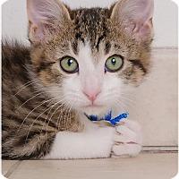 Adopt A Pet :: James Dean C170100 - Edina, MN