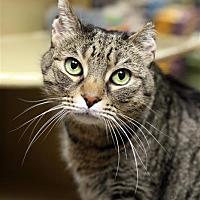 Adopt A Pet :: Maya II - Fairfax Station, VA