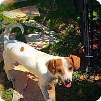 Adopt A Pet :: A76819 Ford - San Antonio, TX