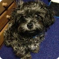 Adopt A Pet :: LOVIE - ROCKMART, GA