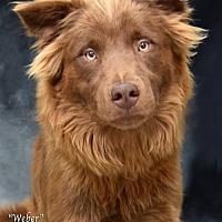 Adopt A Pet :: Kenai (Weber) - Temple, GA