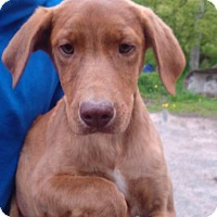 Adopt A Pet :: George - Kendall, NY