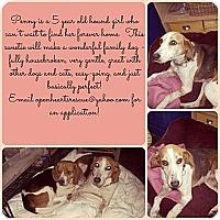 Adopt A Pet :: Penny - Leesburg, VA