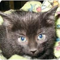 Adopt A Pet :: Ophra - Shelton, WA