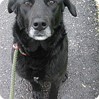 Adopt A Pet :: # 131-14  @ Animal Shelter - Zanesville, OH