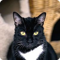 Adopt A Pet :: Daliaette - Chicago, IL