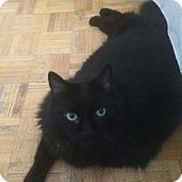 Adopt A Pet :: Max - Brampton, ON