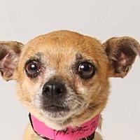 Adopt A Pet :: Krista - Colorado Springs, CO