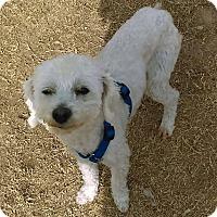 Adopt A Pet :: Mr. Jellybeans - El Paso, TX