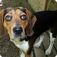 Adopt A Pet :: Grace - Fennville, MI