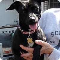 Adopt A Pet :: Darla - Savannah, GA