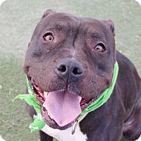 Adopt A Pet :: *GASHTA - Las Vegas, NV