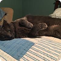 Adopt A Pet :: Luna (@ Woodbury Petsmart) - Roseville, MN