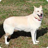 Adopt A Pet :: SCARLETT - Andover, CT