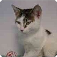 Adopt A Pet :: OJ - Arlington, VA
