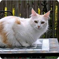 Adopt A Pet :: Scooter - Alexandria, VA