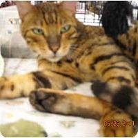 Adopt A Pet :: Reggie - Riverside, RI