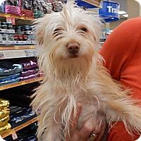 Adopt A Pet :: Taffy - Tucson, AZ