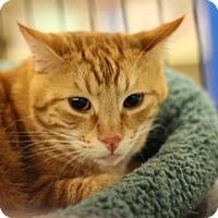 Adopt A Pet :: AJ - Sacramento, CA