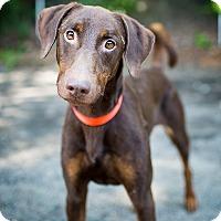 Adopt A Pet :: Wrangler - Bath, PA