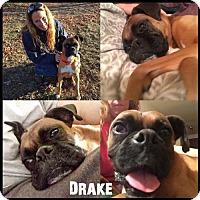 Adopt A Pet :: Drake - Ponca City, OK