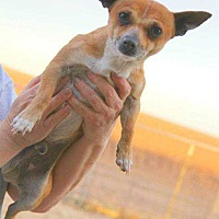 Adopt A Pet :: Bolt - Crosbyton, TX