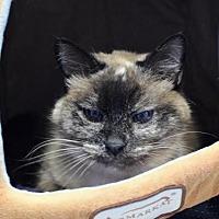 Adopt A Pet :: Princess Leia Aztec - Denver, CO