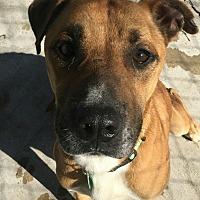 Adopt A Pet :: Nikey-adoption pending - Hanna City, IL