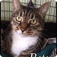 Adopt A Pet :: Betsy - Breinigsville, PA