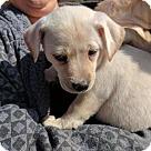 Adopt A Pet :: 'Irish Puppies' Charm