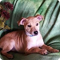 Adopt A Pet :: Eros - Sacramento, CA