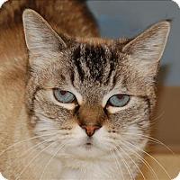Adopt A Pet :: Tiffany - Sherwood, OR