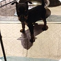 Adopt A Pet :: Sprite - Lake Forest, CA