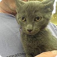 Adopt A Pet :: Emme - Warren, MI