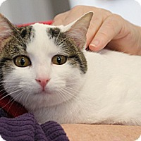Adopt A Pet :: Garbo - Chattanooga, TN