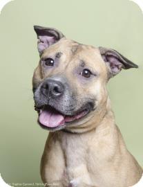 Shepherd (Unknown Type) Mix Dog for adoption in Brooklyn, New York - Truffles