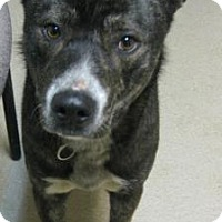 Adopt A Pet :: Oscar - Gary, IN