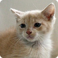 Adopt A Pet :: Sally - Fort Madison, IA