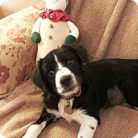Adopt A Pet :: Paris - Knoxville, TN