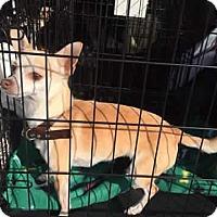 Adopt A Pet :: Bendy - Blanchard, OK