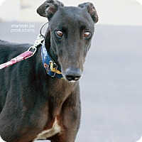 Adopt A Pet :: Taylor Jo - Gainesville, FL