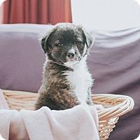 Adopt A Pet :: Keegan - Boston, MA