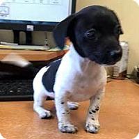 Adopt A Pet :: ZANDER - ADOPTION PENDING! - Pennsville, NJ
